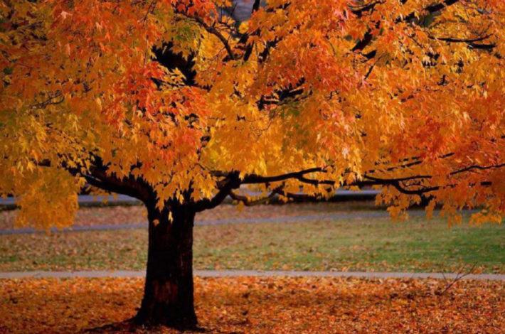 Podzimní klubové setkání